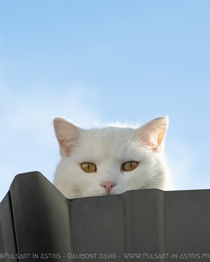 chat roux qui baille