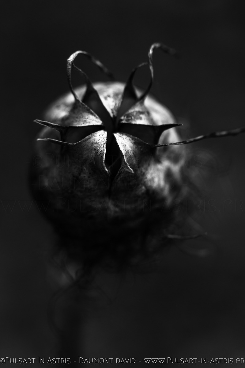 feuille effet papillon