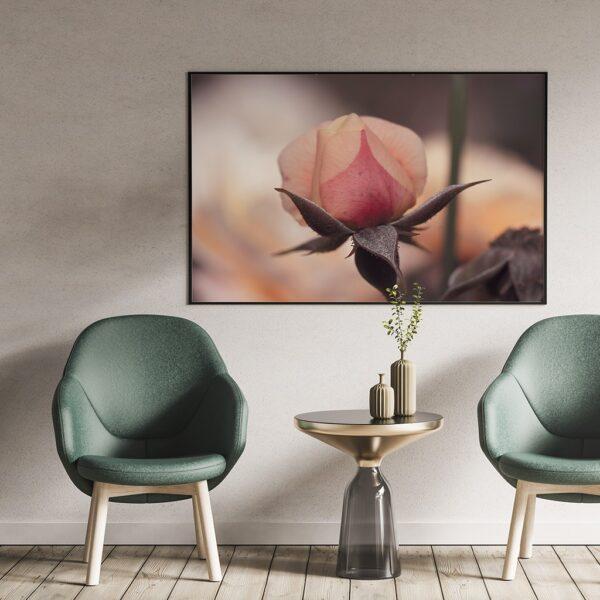 Affiche fleur déco photographie
