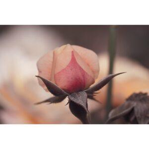 Poster fleur, déco floral, photo affiche