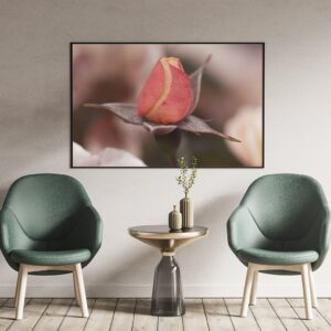 Poster rose romantique