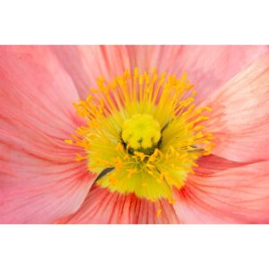 Poster fleur macrographie