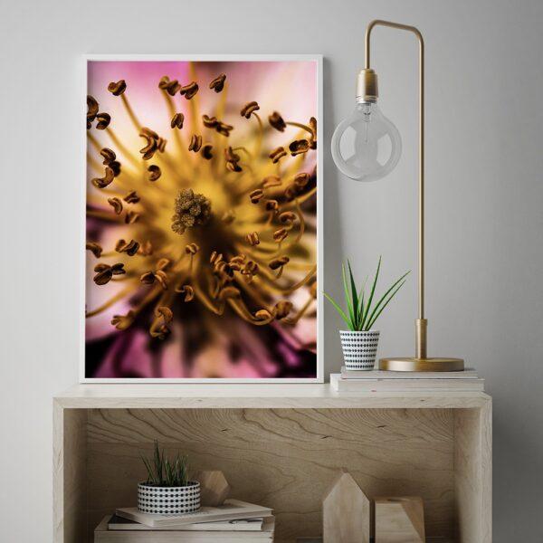Affiche fleur couleur rose et jaune, photographie professionnelle