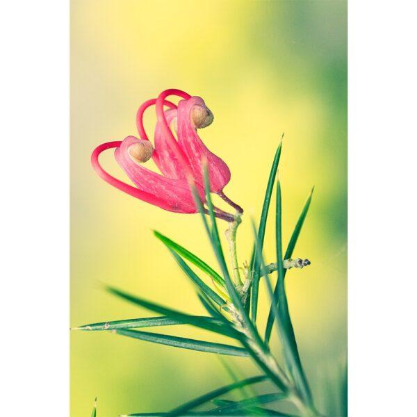 Affiche fleur couleur rose et verte, photographie macro pulsart in astris