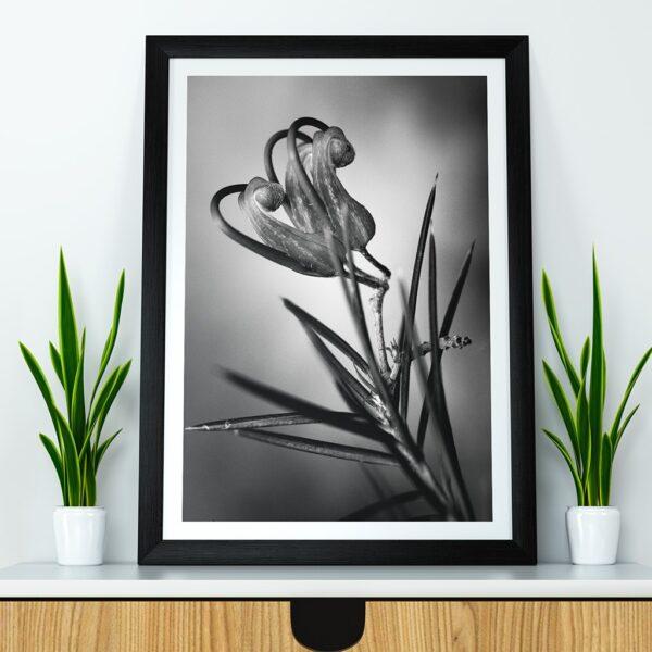 Affiche fleur noir blanc, photographie macro pulsart in astris