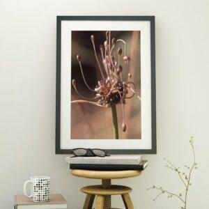 Affiche pulsart in astris, photo fleur en couleur