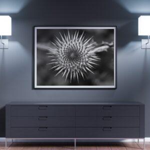 Affiche photographie pulsart in astris, fleur en noir et blanc