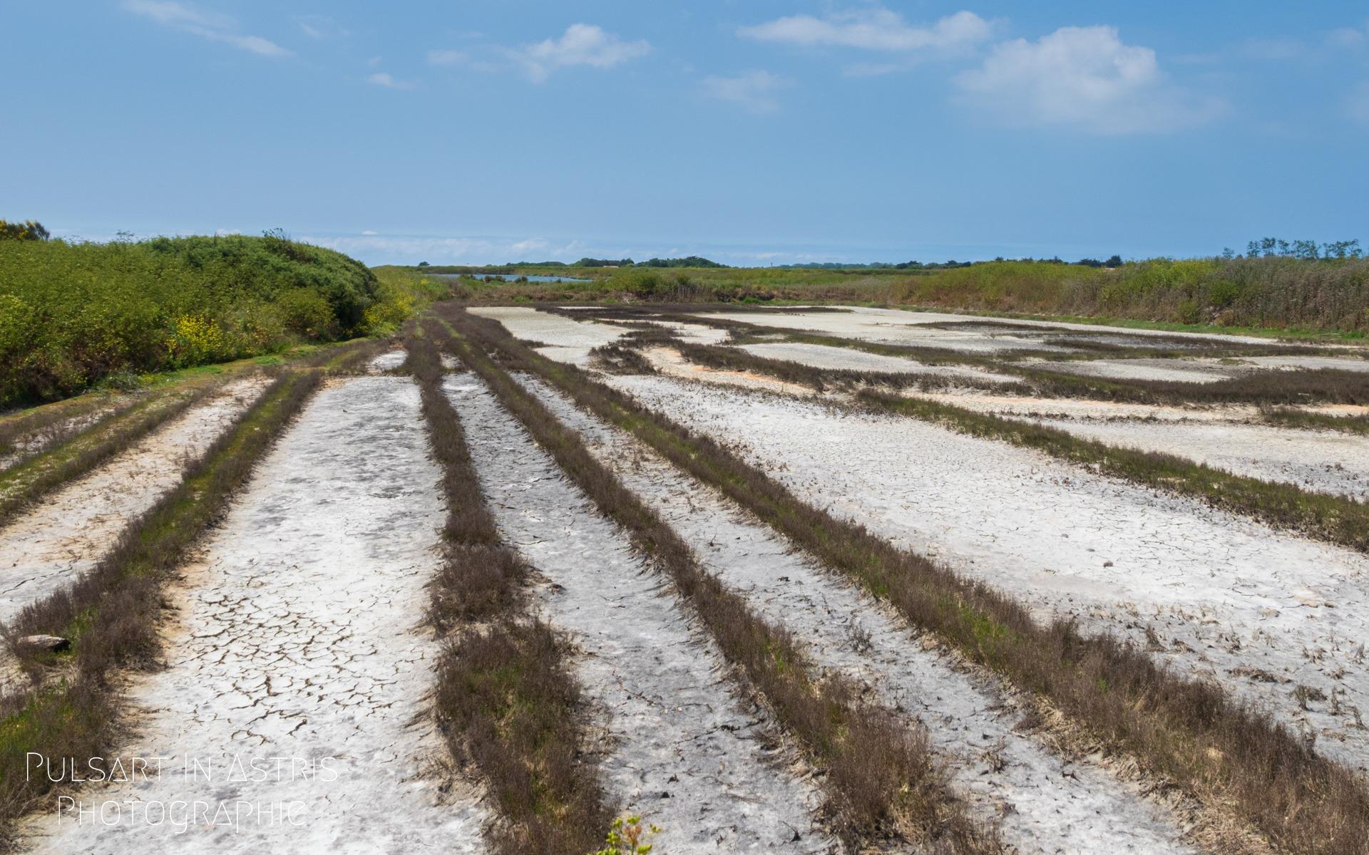 paysage de l'ile de Ré