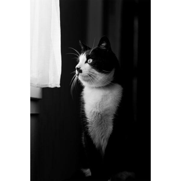 chat devant une fenetre