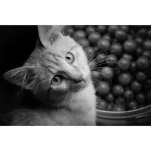 chat au joli regard