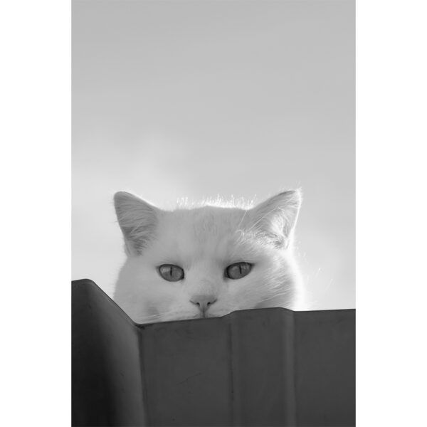 chat qui observe de haut