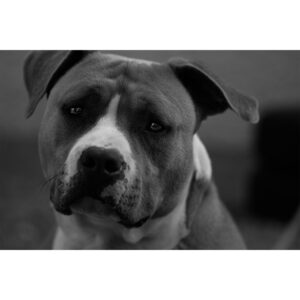 portrait chien adorable