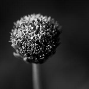 fleur sans pétales