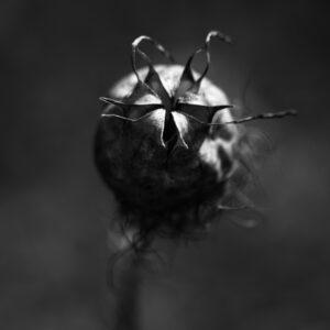 photographie nature morte