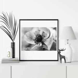 Posters de Fleurs